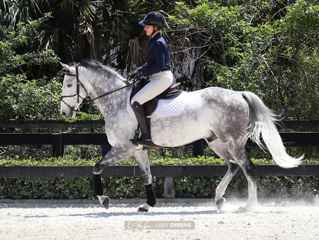 QBS Equestrian Selects Catherine Tyree to Campaign Cantalupe V/D Holstenhoeve