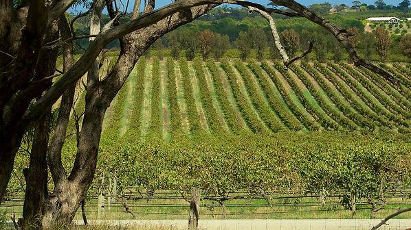 d'Arenberg Wines.jpg