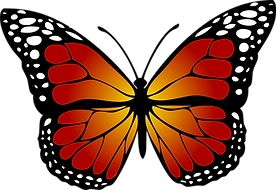 butterfly-1662471_1920.png
