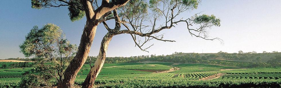 Clare-Valley_crop.jpg
