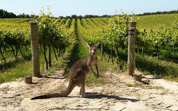 Kangaroo Island Wines.jpg