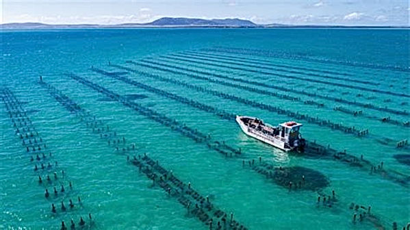 Pure Coffin Bay Oysters - Farm Tours.jpg