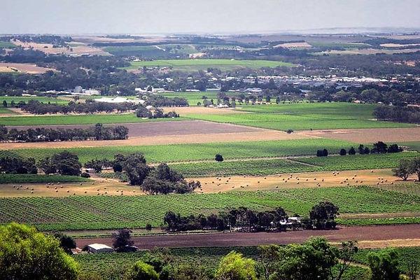 Barossa Valley 3.jpg