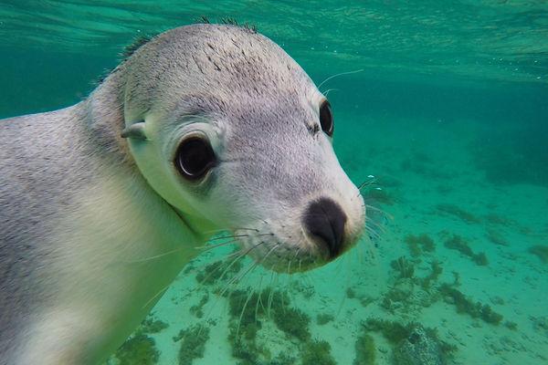 Sea-lion-cute.jpg