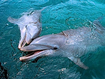 Swim with the Dolphins.jpg