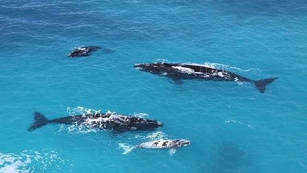 Whales off the coast.jpg
