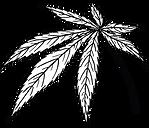 white leaf.png