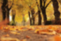 autumn scene.jpg
