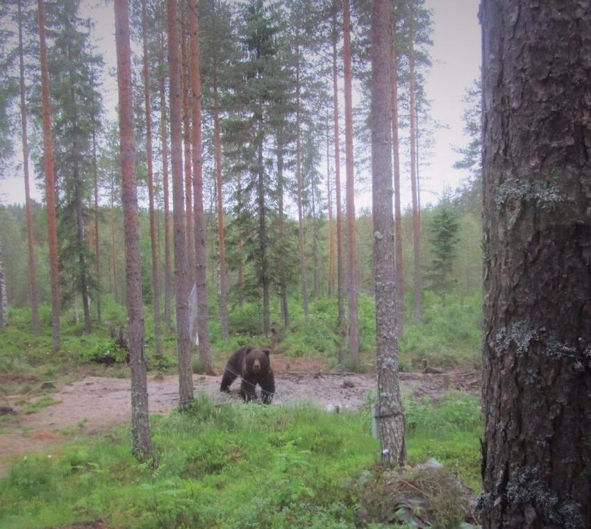 Karhuja katselemaan / Be Wild!