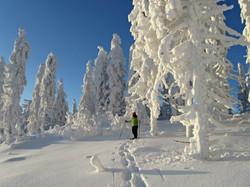 Lumikenkäile / Snowshoeing