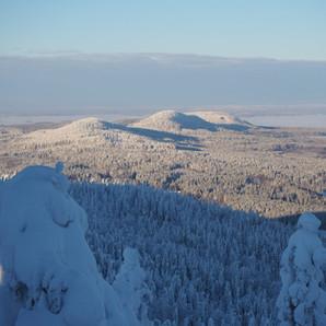 Winter Koli