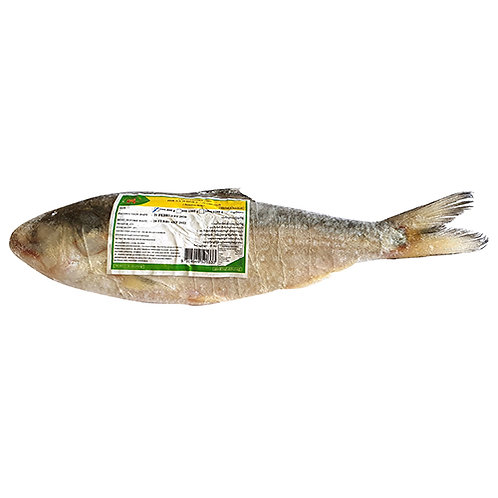 Cleaned Hilsa GGS