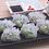 Thumbnail: Prawn & Chive Dumplings