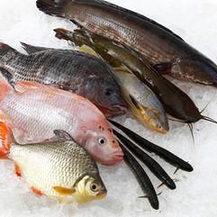 Fish_MG_1204.jpg