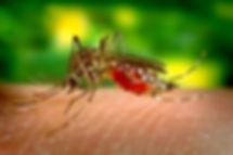 mosquito-542156__340.jpg