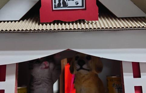 もふもふ犬猫神社