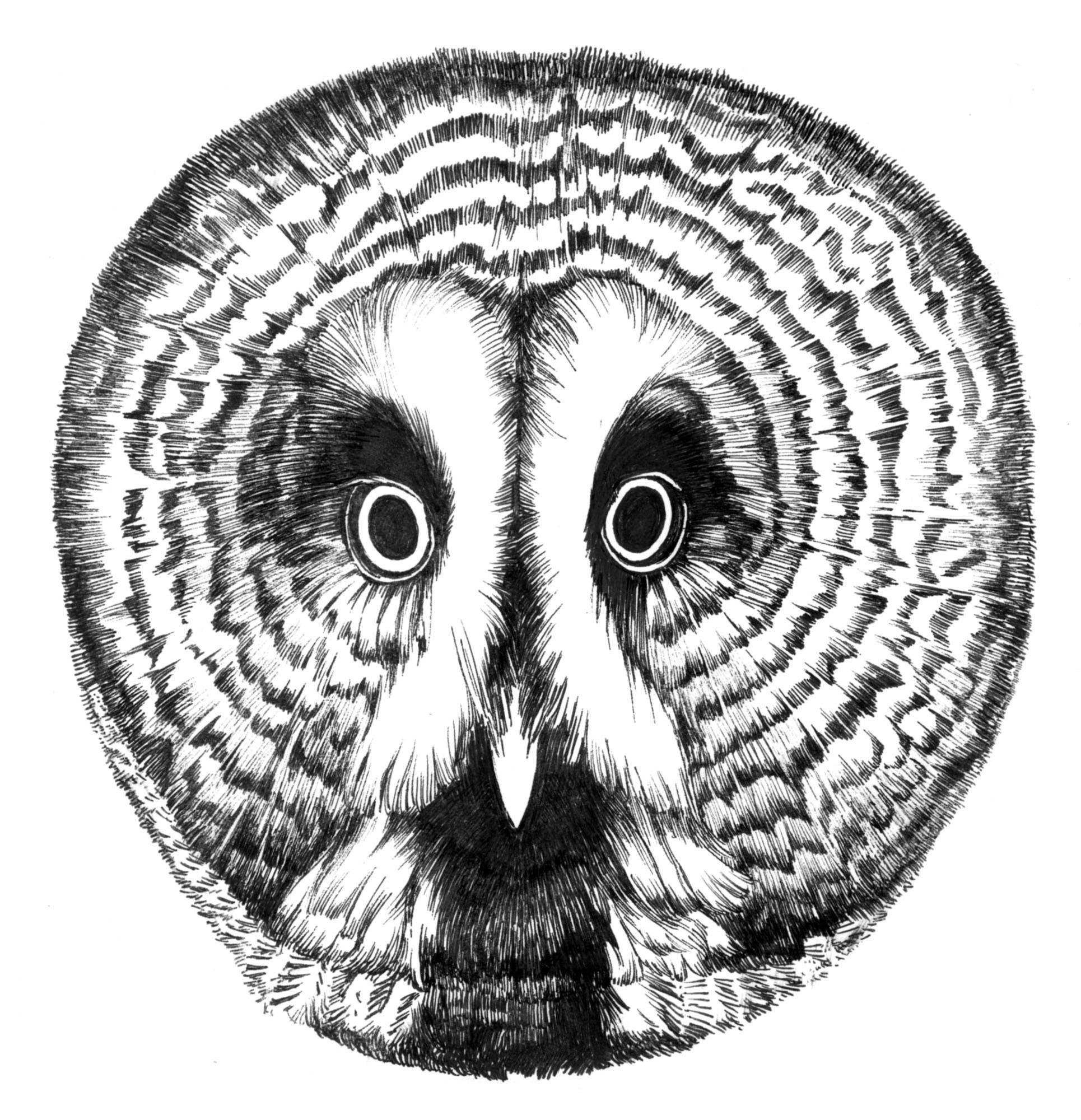 カラフトフクロウ顔