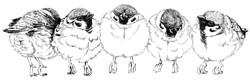 5連福良雀