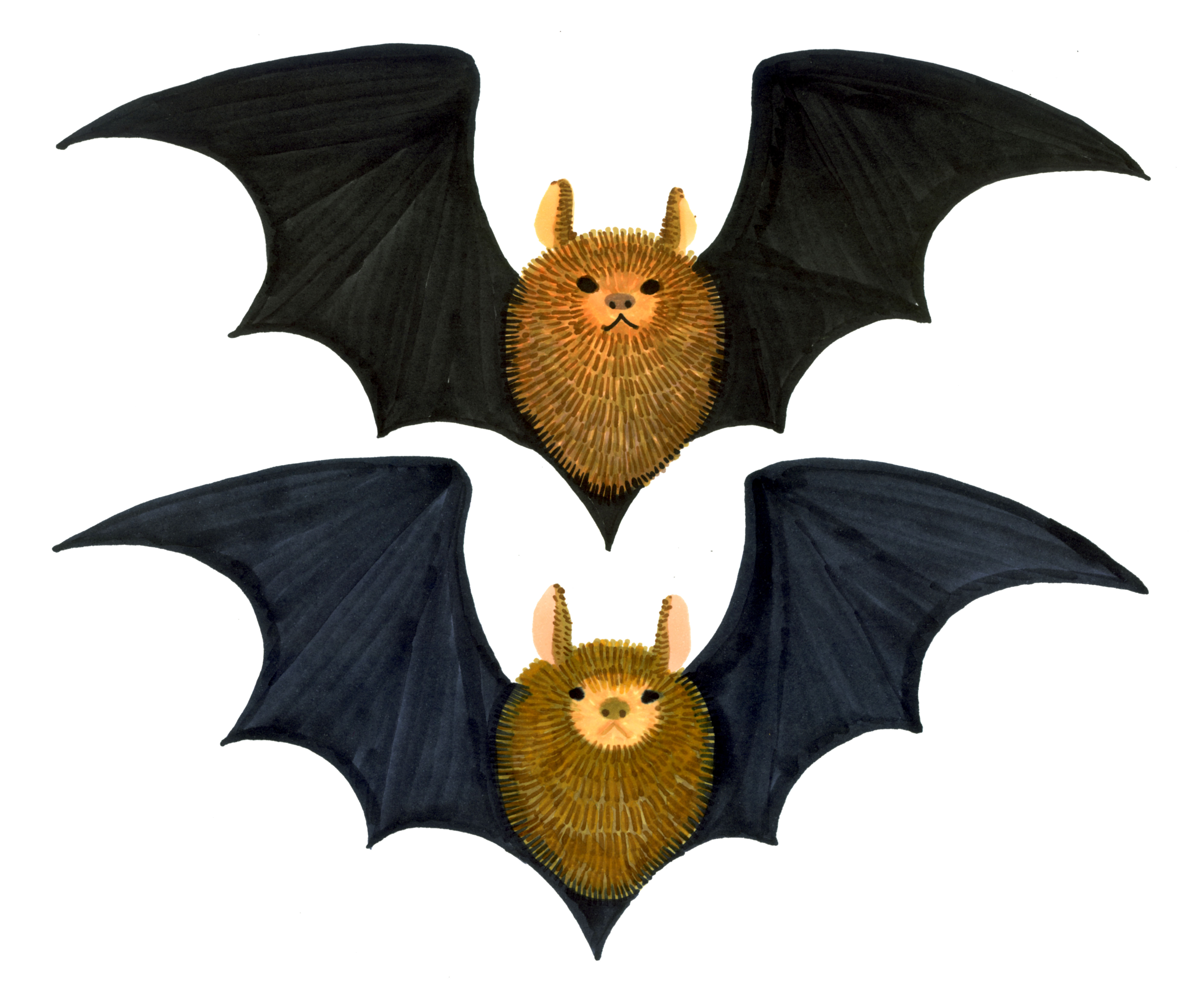 Two Bats