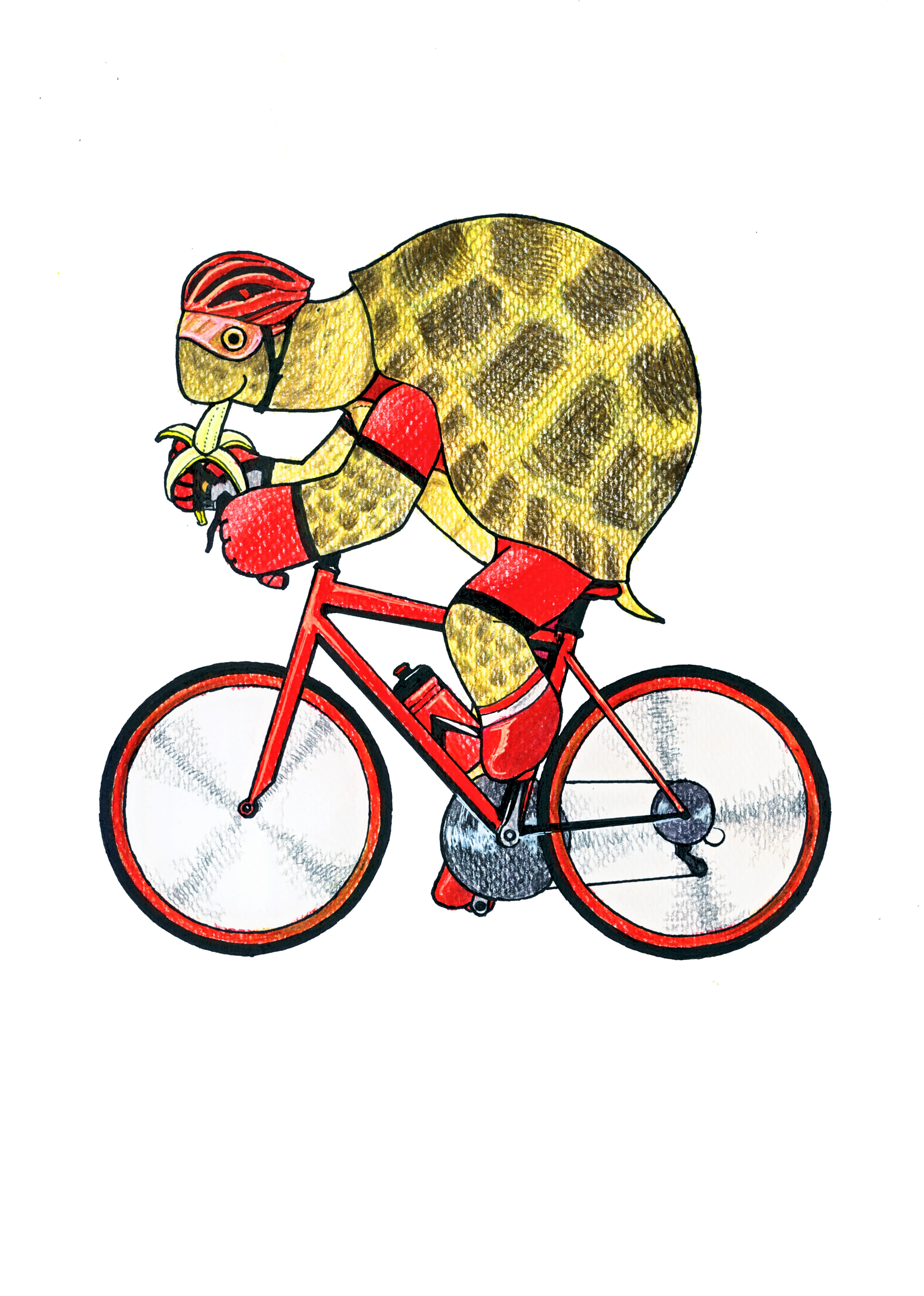 cyclist of tortoise (Snack time !)