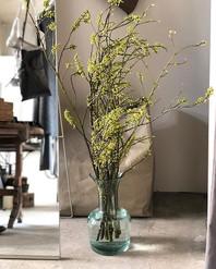 寒い時期は水替えも億劫ですが、ショップのお花をようやく入れ替えました。青文字とい