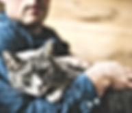 gato no colo do dono