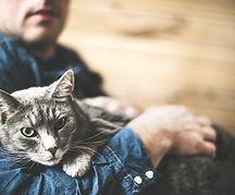 4 юни ден на прегръдката на котка-lubkailievakk.com