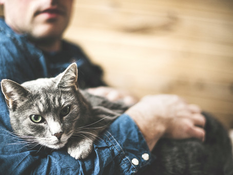 Finding the Right Companion: Tips for First-Time Pet Owners
