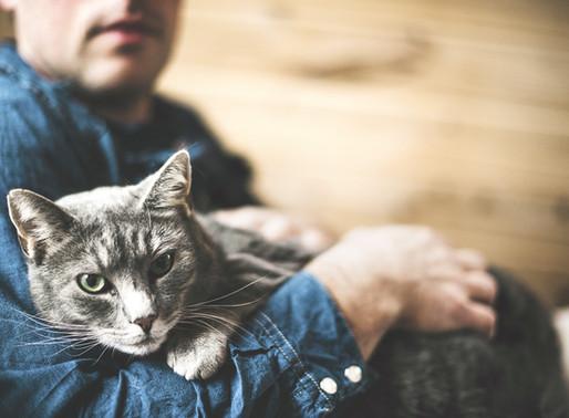 Σνακ και λιχουδιές για γάτες