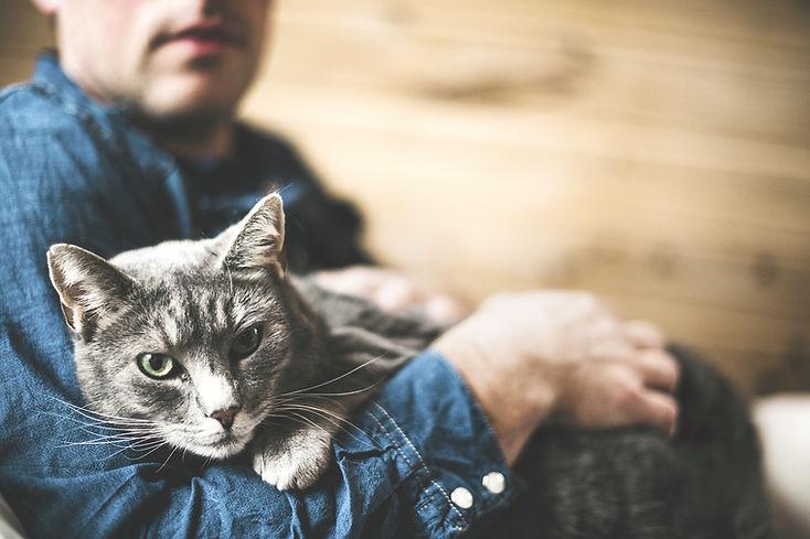 gato cinzento
