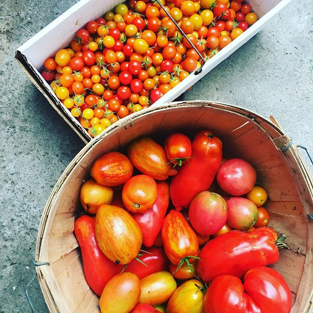 Beautiful tomatoes