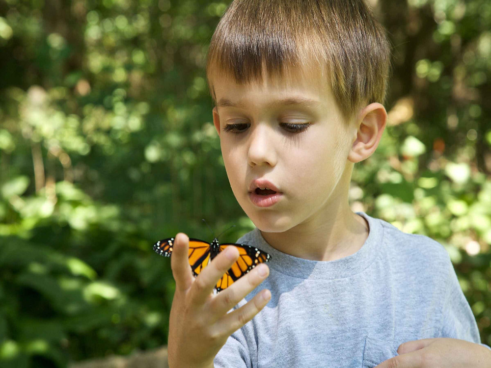 small child holding a butterfly