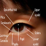 Asian Eyelid Surgery ~ Houston