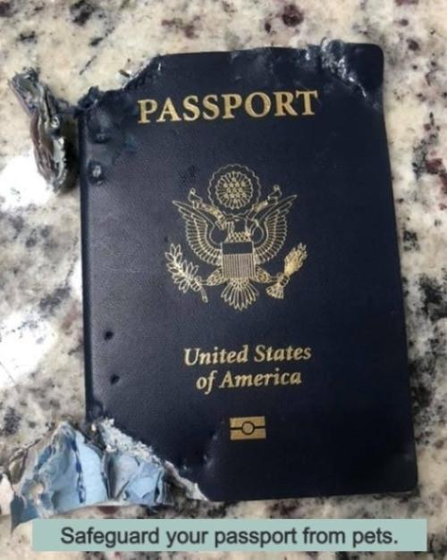 dog chewed US passport
