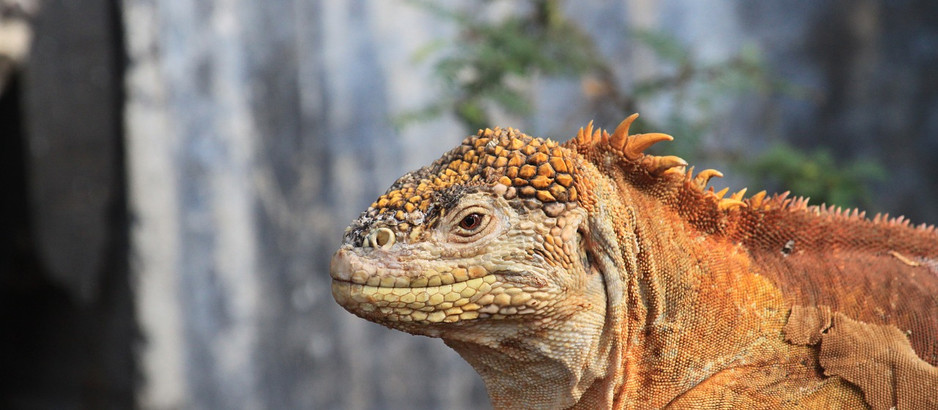 When is the Best Time to Visit the Galapagos Islands?