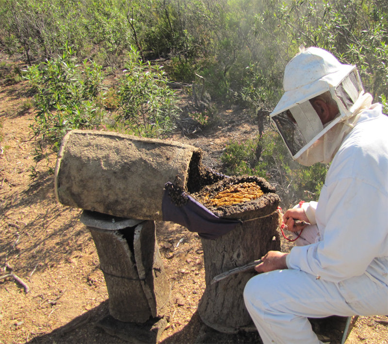Recuperación de colmenas con apicultura tradicional