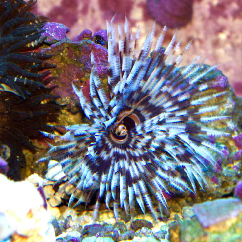 Treasure Coast Corals