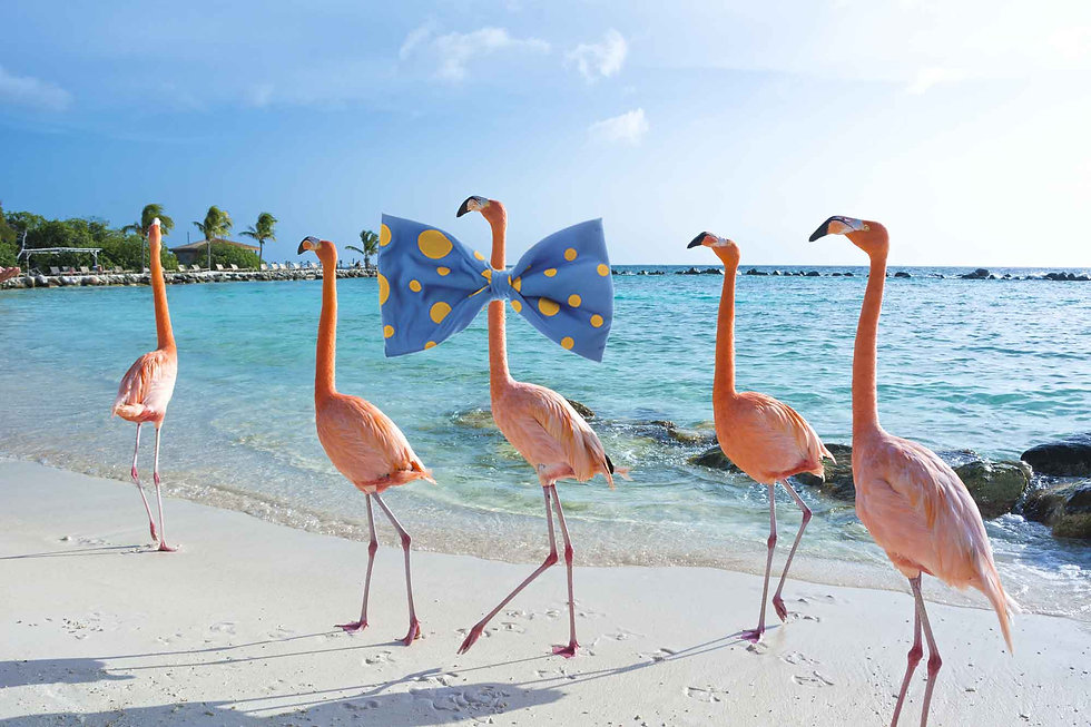 flamingos-bow-tie.jpg