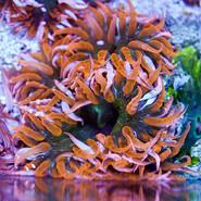Flower Nem