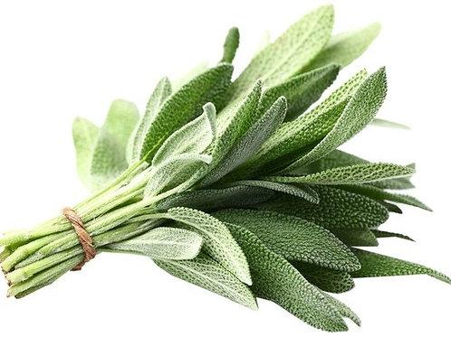 Fresh Sage (8 oz)