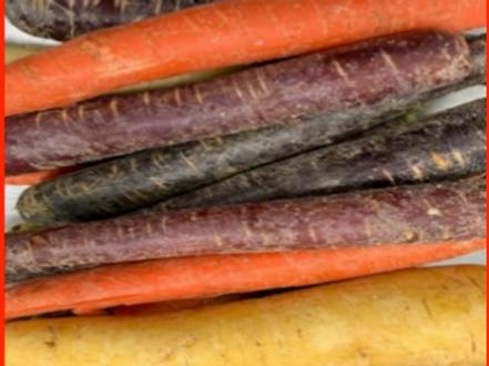 Mixed Rainbow Carrots (Mexico) (25 lb)