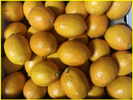 Meyer Lemons (USA) (5 lb)