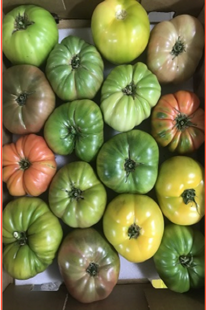 Heirloom Tomatoes (Mexico) (5 lb)