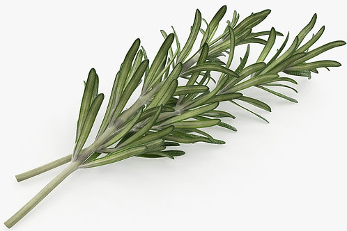 Fresh Rosemary (8 oz)
