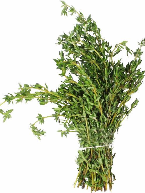 Fresh Thyme (8 oz)