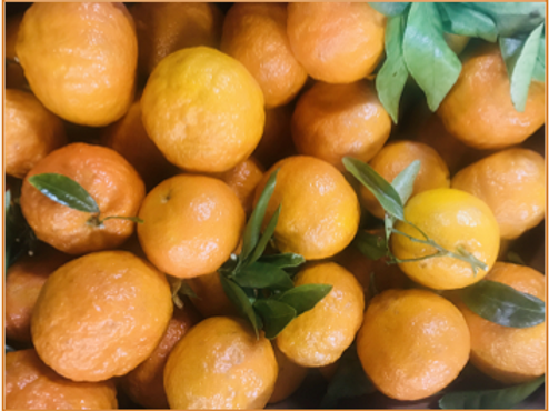 Gold Nugget Mandarins (USA) (10 lb)