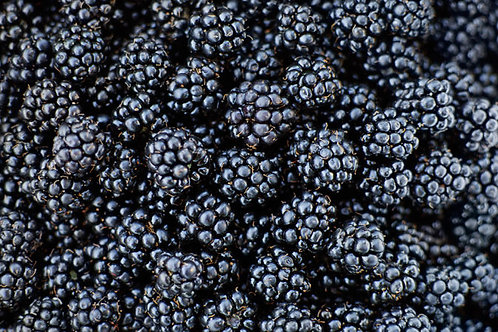 Blackberries (Three 6 oz baskets) - Price TBD