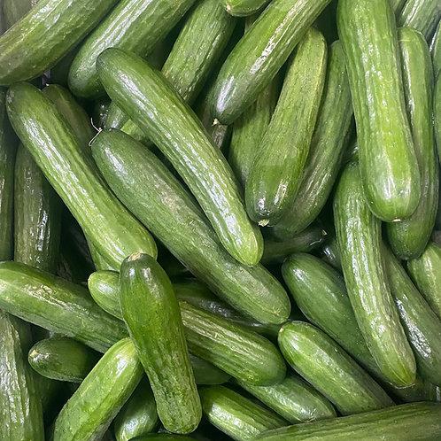 Persian Cucumbers (5 lb)