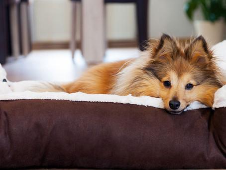 Como escolher o tamanho certo de roupinha e caminha para o seu pet?