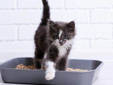 3 areias higiênicas para gatos